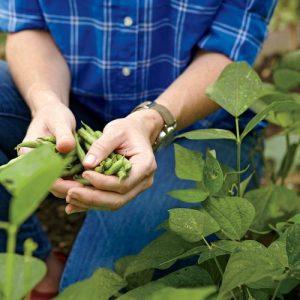 August Garden Treats