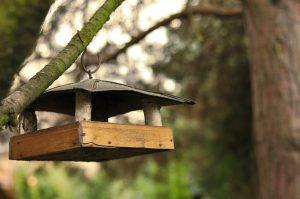 autumn-bird-feeder