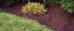 Color-Rich-Mulch-main_02