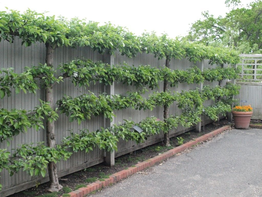 Espalier Lane Forest Products