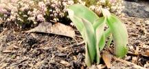 Gardening in March