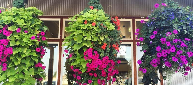 LFP Hanging Baskets