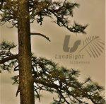 LandSight Landscape Design & Construction