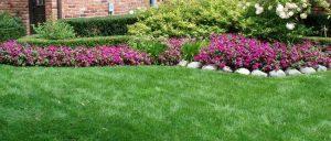Lawn Base Planting Soil