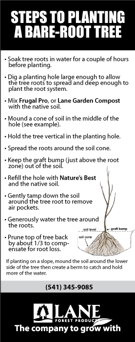 plant a bare root tree steps