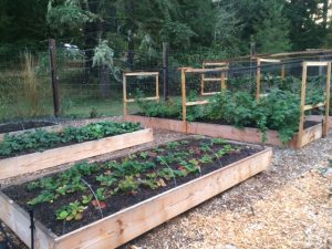 Full, Healthy Raised Garden Beds