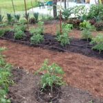 Garden Path Sheet Mulch 2
