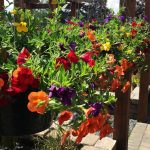 flowers-hanging-baskets--at-lane-forest-products