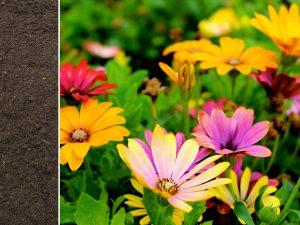Garden Rich Soil