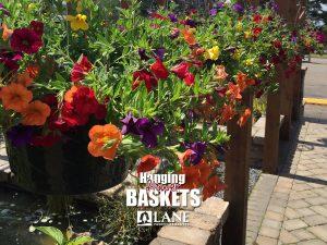 hanging-flower-basket-calibrachoa