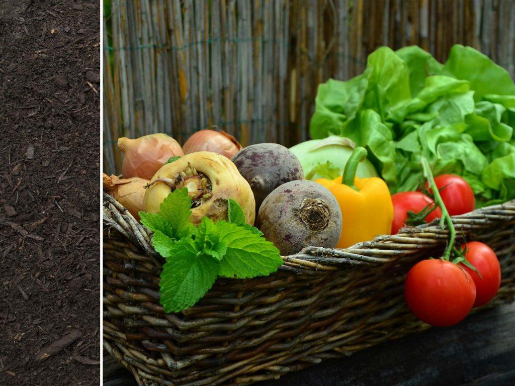 Lane Garden Compost