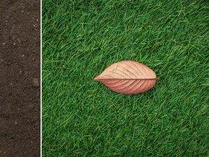 Lawn Base Soil
