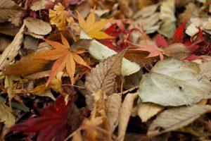 leaves-984544_1280